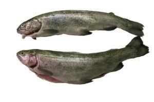 proteinová dieta povoluje i ryby