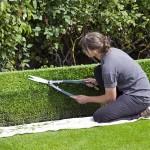box-hedge-topiary-869073_640